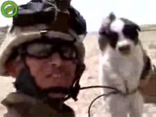 Marinedog