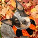 Dog leaves