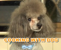 Cookingdog