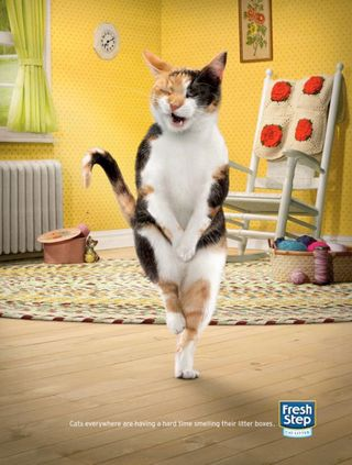 "Photo: Cute Fresh Step Cat Litter Advertisement, This Kitty Has to ""Go ..."