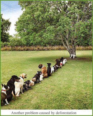 Dogs lineup tree