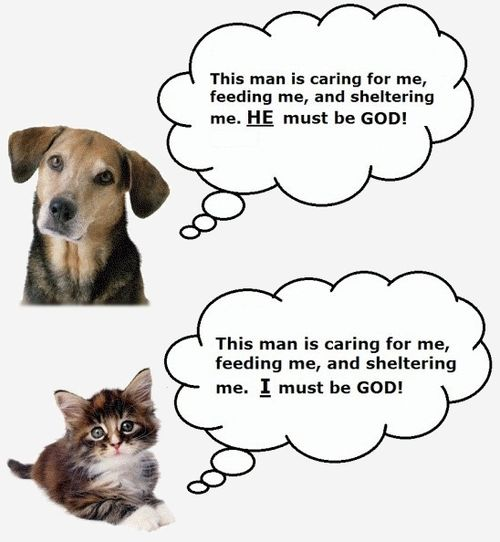 Funny Comparison Between Cats And Dogs
