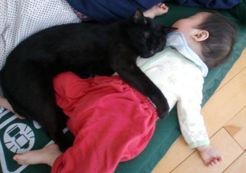 Cat hugs baby