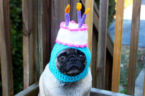 Funny-pug-dogs-in-hats-4