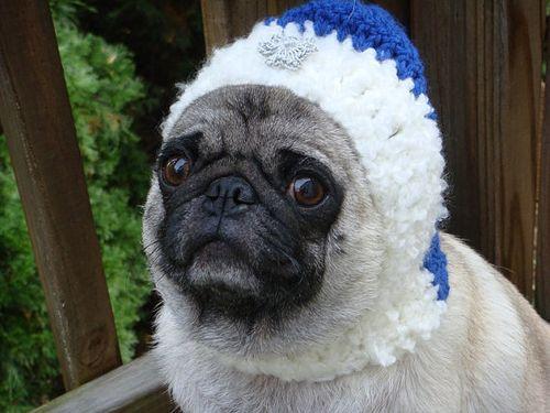 Dog hannukah hat