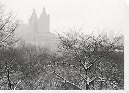 Snowlined_trees_centralpark