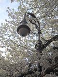 Springtime lampost