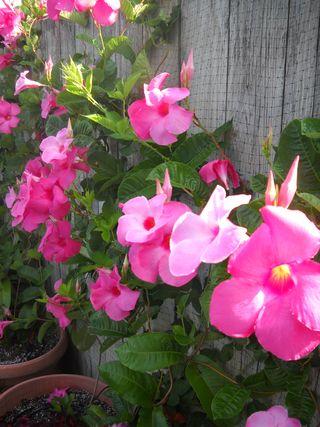 Flowers_571driftwood_fireisland_pines