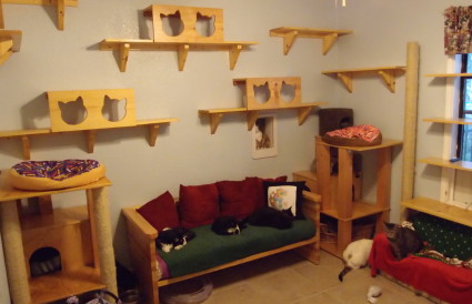 Cat capenter cookies Shelves 3 425