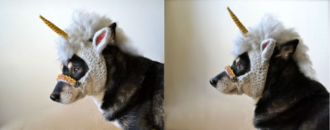 Unicorn-mask-for-dogs-480x190