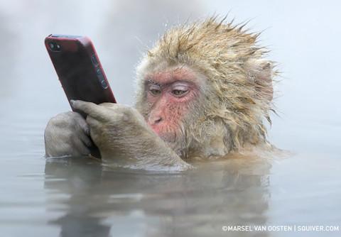 Snow-monkey-1-480x334