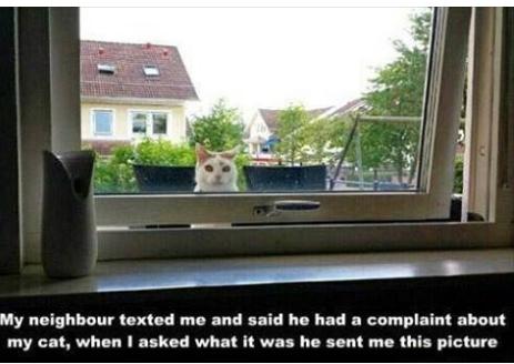 Cat peeper