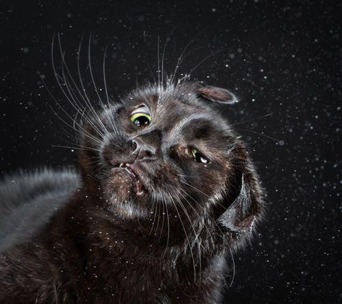 Shake cat