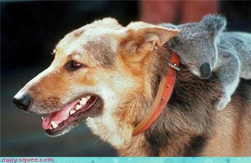 Uuf Unusual-animal-friendships-36