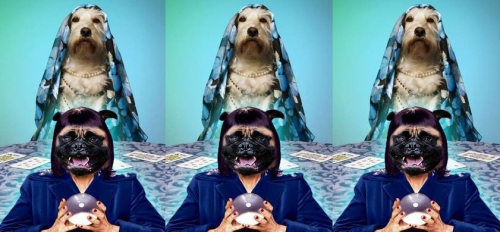 Psychic dogs