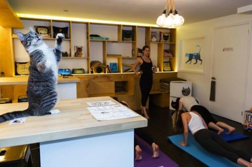 Meow-parlour-yoga-4