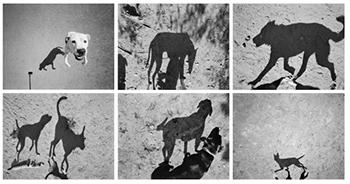 Platos dogs