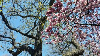 Apr 22 st lukes garden