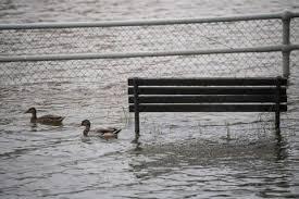 Ducks in overflowing creek