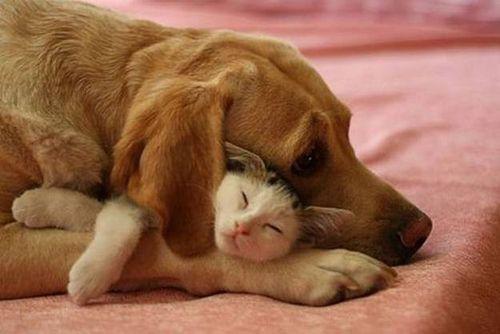 Dog cat hug