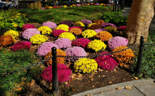 Oct 26 - mums abingdon sq park