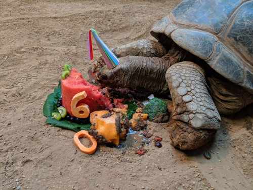 Zoo birthday