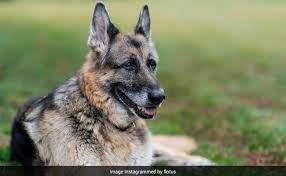 Champ Biden dog